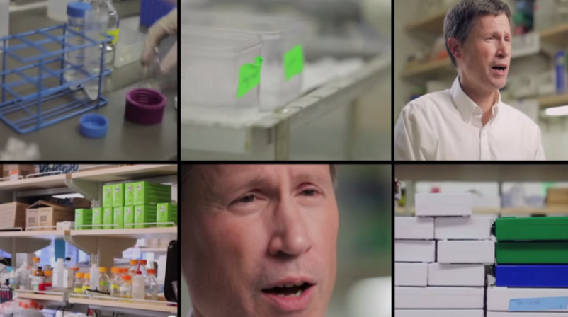 """Image from video """"UCSF scientists: the power of stem cell biology"""""""