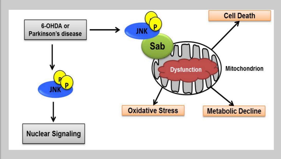 Parkinson\'s Disease Overview   Neuroscience